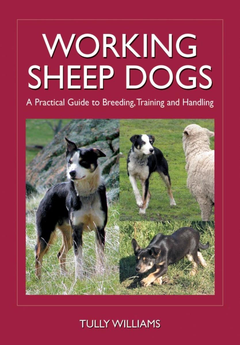 Working Sheep Dogs