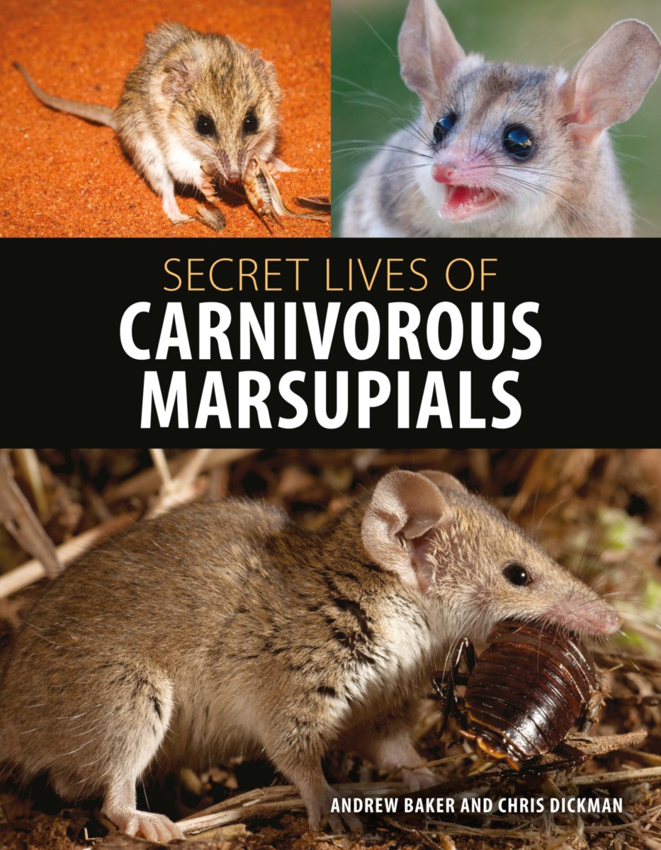Secret Lives of Carnivorous Marsupials